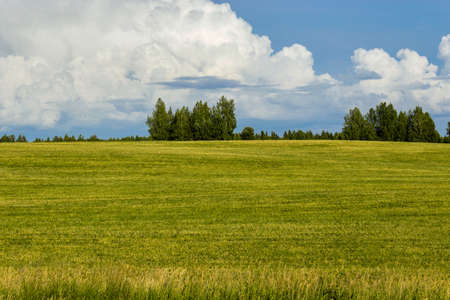 Blue cloudy sky over a green summer field Stock Photo