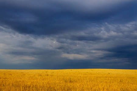 Dark storm clouds over yellow wheat field