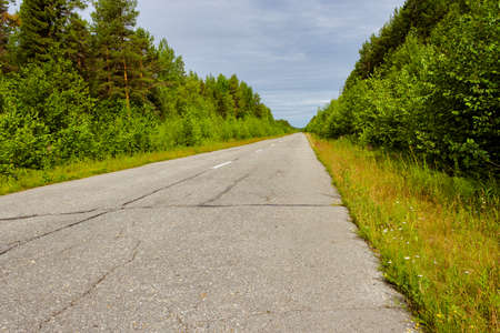 Empty road stretching into the distance through the forest