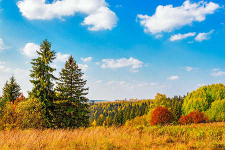 View from the hill on a bright autumn forest Stock Photo