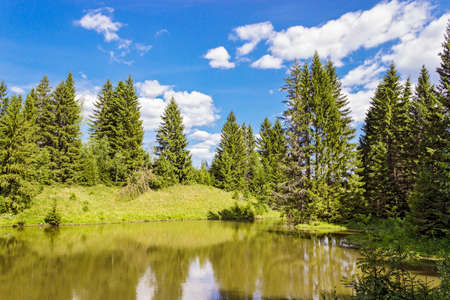 provincial forest parks: A small lake in the forest in summer. Russia Stock Photo