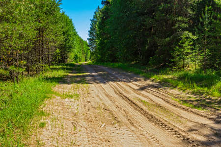 Dirt road in the forest a sunny summer day Stock Photo