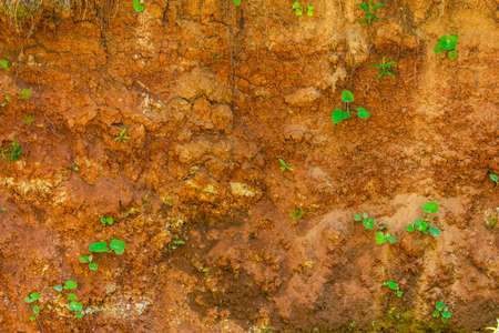 Background of red clay with rare green plants