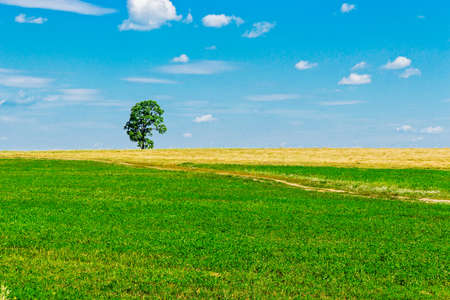 High tree in the field a sunny summer day Stock Photo
