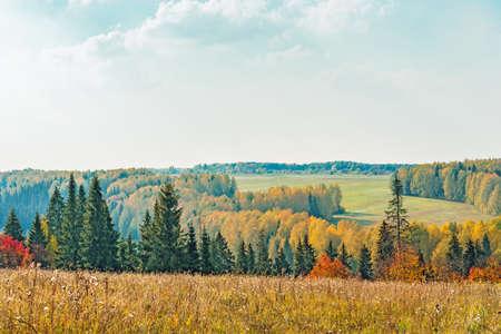 autumn colour: autumn forest landscape Stock Photo