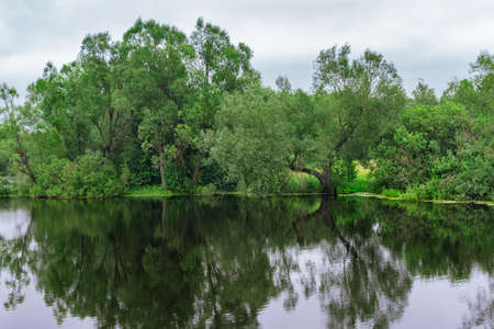 Willow on the shore reflected in the lake on a summer day Stock Photo