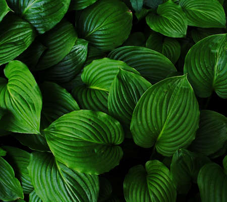 green leaves background Banco de Imagens