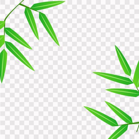 Spring and summer green leaves on a transparent background, decoration element for banners, stickers, greeting cards, posters