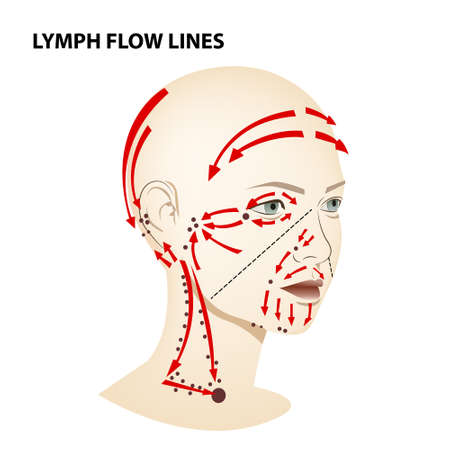 Medical poster. Lymphatic flow on the face and neck of a person, vector diagram of lymphatic drainage. Ilustração