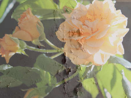rendition: Buff Beauty rose in grunge rendition on grey background Stock Photo