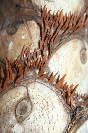 奇妙な目の形をしたパターンは、ヤシの木の樹皮のクローズ アップ。