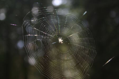 A close-up of a spider sitting in the middle of her web. Stock Photo - 3226761