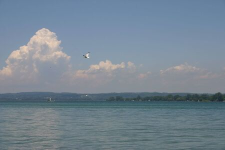 A seagull flying across a view of an inlet off of Lake Ontario.