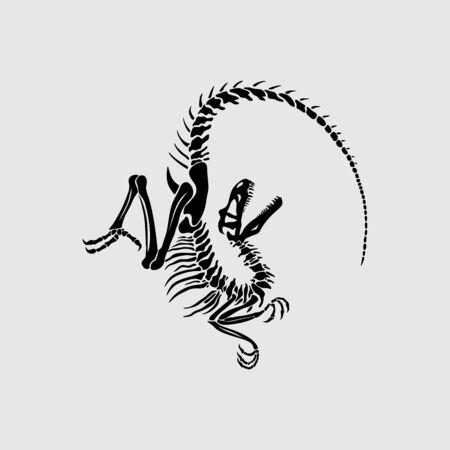 Graphic illustration of velociraptor skeleton. Stylized dinosaur fossil.