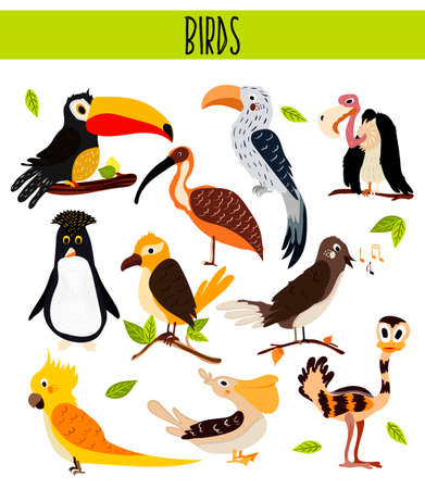 cockatoo: Set of Cute cartoon Animals birds living in different corners of the planet the forests and the jungles. Toucan, vulture, parrot, penguin, ostrich, cockatoo, Pelican, Nightingale Vector illustration