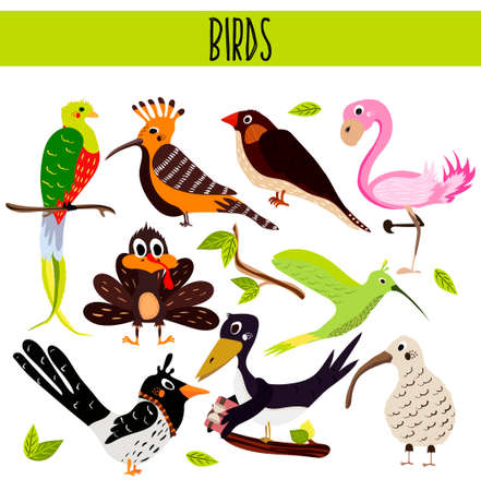 magpie: Set of Cute cartoon Animals birds living in different corners of the planet the forests and the jungles. Flamingo, kiwi, magpie, crow, upupa, Hummingbird, Turkey.Vector illustration