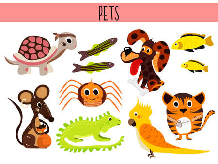 lagartija: Conjunto de animales de dibujos animados lindos y pájaros domésticos. Tortuga, araña, gato, perro, peces de acuario, iguana, lagarto, y el ratón loro. Ilustración vectorial
