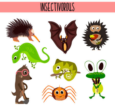cartoon bat: Cartoon Set of Cute Animals insectivores living in different parts of the world forests and tropical jungle .A bat, a lizard, hedgehog, mole,spider, chameleon and frog fun . Vector illustration Illustration