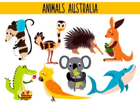 possum: Set of Cute cartoon Animals and birds of Australia and its ostrovov. Kangaroo, possum, numbat, the Koala bear, EMU, parrot, alligator, echidna, and a predatory shark . Vector illustration Illustration
