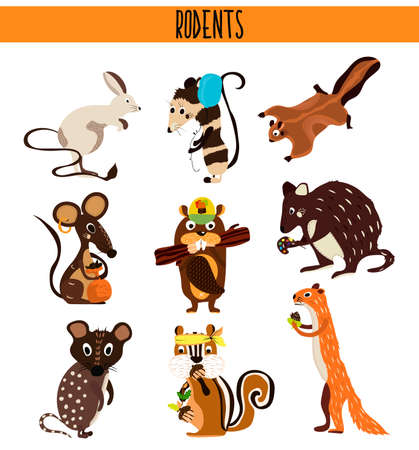 opossum: Cartoon Set of Cute Animals rodents living on the planet .Squirrel, mouse, opossum, Coney, beaver, Chipmunk, quoll, quokka . Vector illustration Illustration