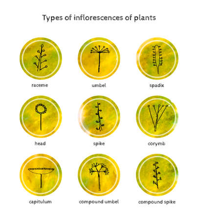 raceme: 9 types of inflorescences of plants. The style of the sketch and watercolor. Vector illustration