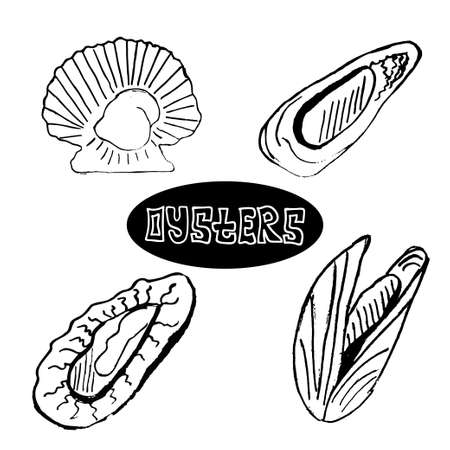 oyster shell: The sketch set seafood oysters and scallops. Delicacy food. Vector illustration