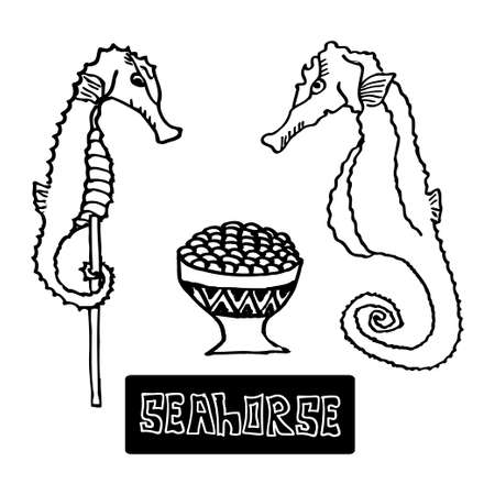delicacy: seafood dried seahorse and the seahorse caviar, a delicacy. Vector