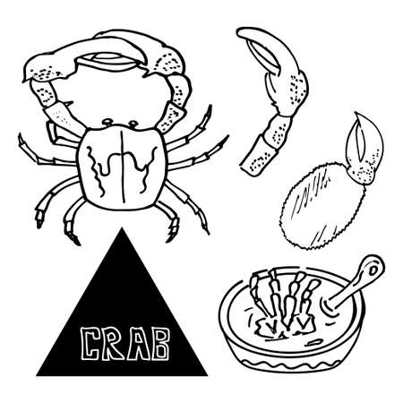 crab legs: seafood sea crab appetizer of crab with beer. Vector