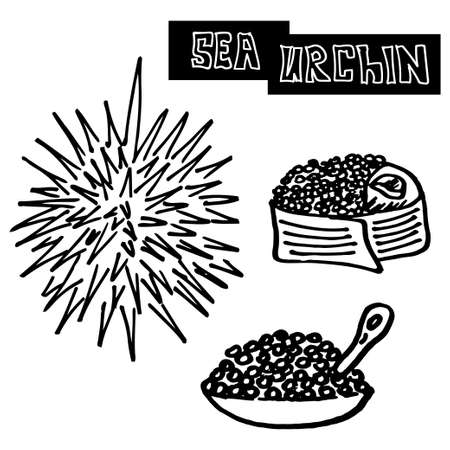 specialty: seafood sea urchin, caviar and sea urchin sushi. specialty food, luxury food. Vector