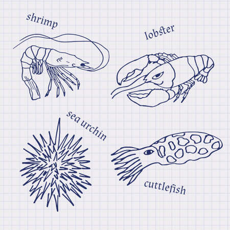 cuttlefish: Drawings in their notebooks in a cage of marine animals and seafood cuttlefish, lobster, sea urchin, shrimp. Vector