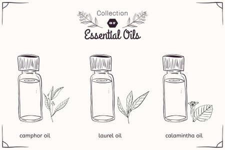 Un ensemble d'huiles essentielles dans le style noir et blanc: camphre, Laurel, Calamintha. Vector illustration