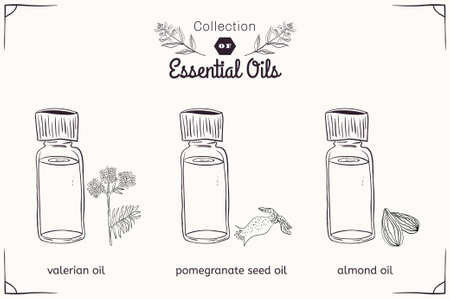 essential: A set of essential oils in black and white style: Valerian, almonds, pomegranate seeds. Vector illustration