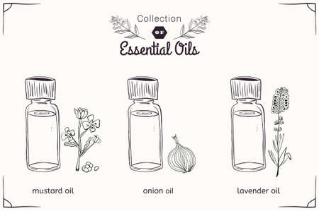 tincture: A set of essential oils in black and white style: mustard, onions, lavender. Vector illustration