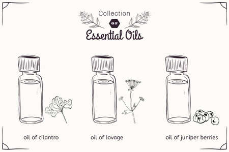 lovage: A set of essential oils in black and white style: cilantro, lovage, juniper berries. Vector illustration Illustration