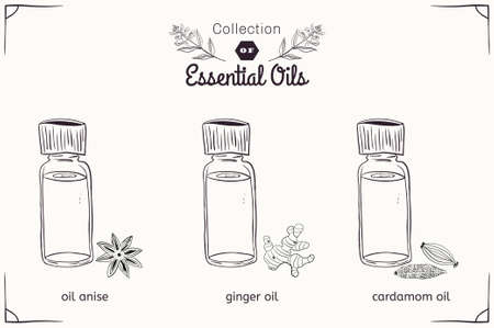 essential: A set of essential oils in black and white style: anise, cardamom, ginger. Vector illustration Illustration