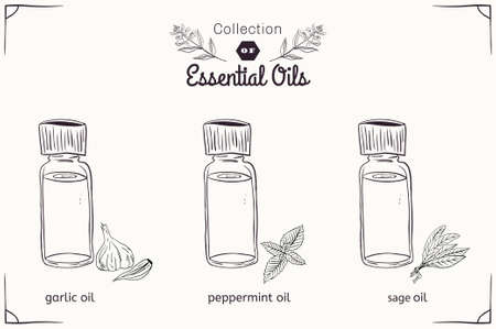 sage: A set of essential oils in black and white style: mint, garlic, sage. Vector illustration
