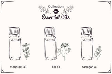tarragon: A set of essential oils in black and white style: marjoram, dill, tarragon. Vector illustration Illustration