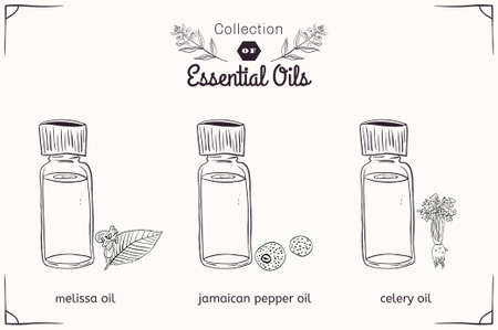 A set of essential oils in black and white style: Melissa, Jamaican pepper, celery. Vector illustration