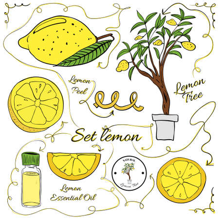 A large set of isolated colorful lemon elements for design on white background. Vector illustration Illustration