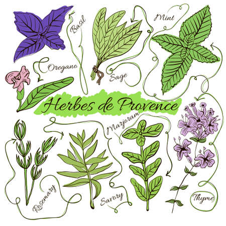 A large set of isolated colorful spices and herbs from French Provence for design on white background. Herbes de Provence. Vector illustration