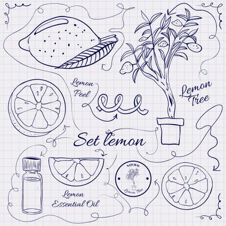 limon: A large collection of stand-alone sketch lemons for design on a sheet of paper into the cage. Vector illustration