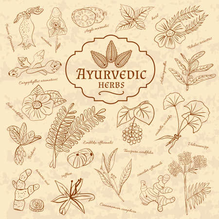 bath supplement: Retro illustration of Ayurvedic herbs. Set of web elements for the design