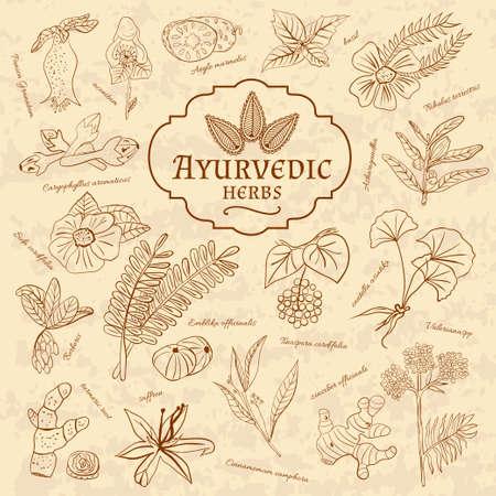 Retro ilustración de hierbas ayurvédicas. Conjunto de elementos para el diseño web Foto de archivo - 50566133