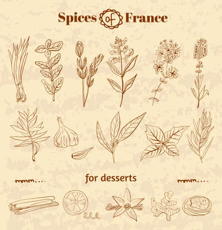 Spice in French cuisine. Herbs used in France for cooking dishes and desserts. Vector illustration