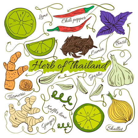 herbalist: Colorful insulated set of local hand drawn herbs and spices dishes of the world on white background. Thailand. Vector illustration