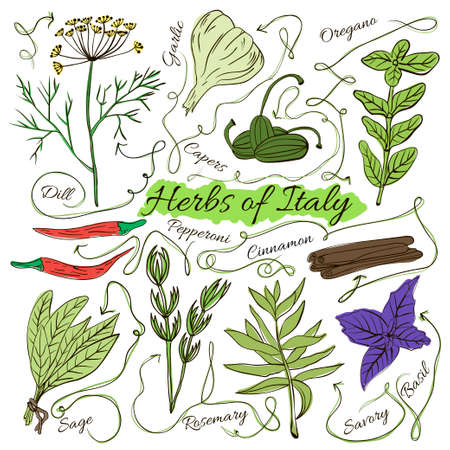 Colorful insulated set of local hand drawn herbs and spices dishes of the world on white background. The indicating arrows. Italy. Vector illustration