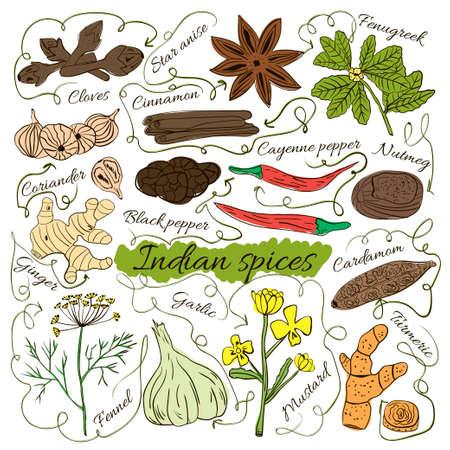 Insieme variopinto isolato di disegnati a mano locali erbe e spezie piatti del mondo su sfondo bianco. Le frecce indicano. India misteriosa. illustrazione di vettore Vettoriali
