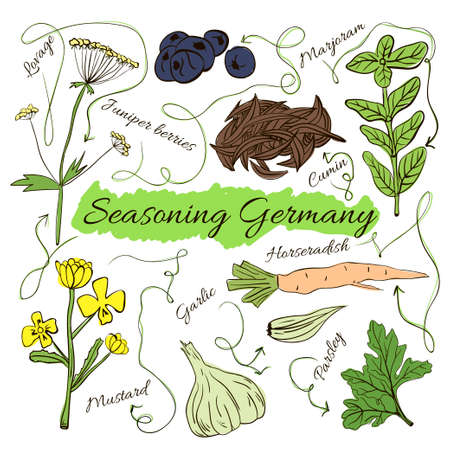herbalist: Colorful insulated set of local hand drawn herbs and spices dishes of the world on white background. The indicating arrows. Germany. Vector illustration