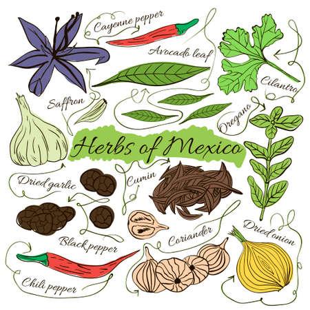 Insieme variopinto isolato di disegnati a mano locali erbe e spezie piatti del mondo su sfondo bianco. Le frecce indicano. Messico Esotico. illustrazione di vettore Vettoriali