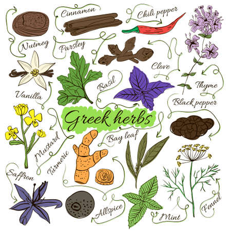herbalist: Colorful insulated set of local hand drawn herbs and spices dishes of the world on white background. The indicating arrows. Ancient Greece. Vector illustration Illustration
